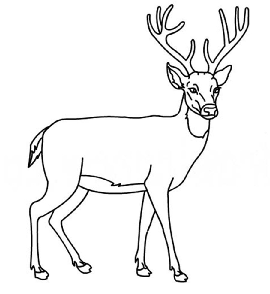 Clipart Of Black And White Bear Deer Moose Caribou And